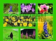 Israel Flowers 010