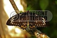 Butterfly 0041