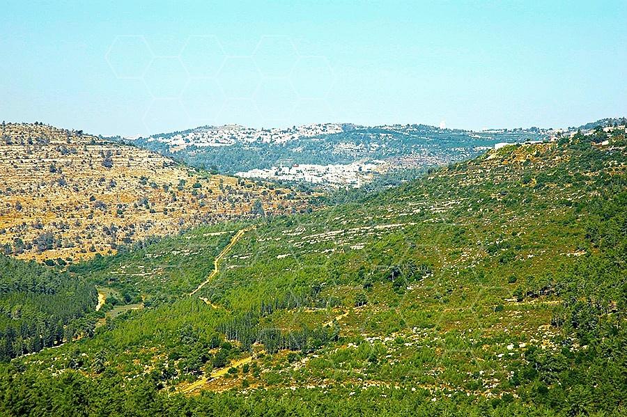 Judaean Hills 004