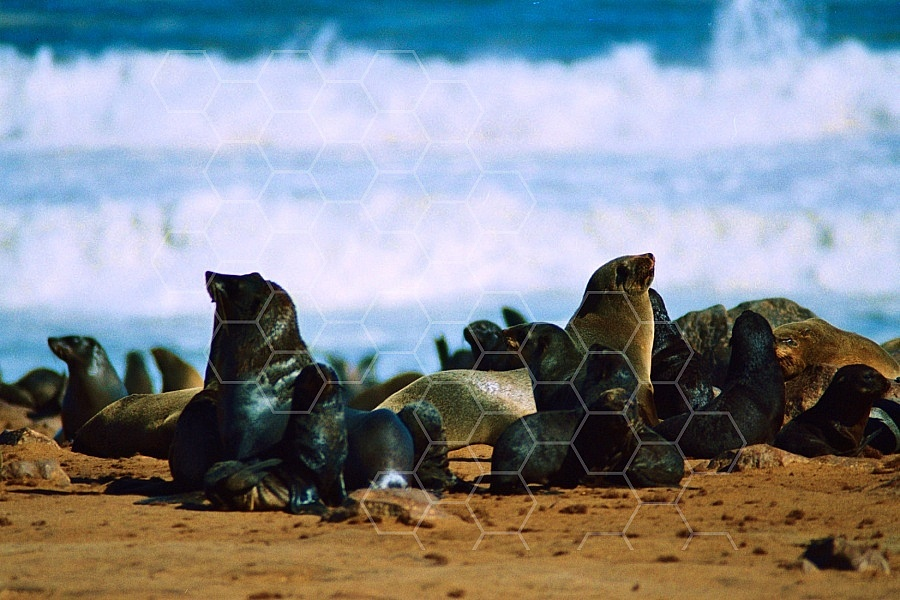 Seal Fish 0004
