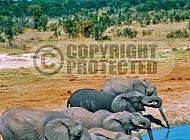 Elephant 0083
