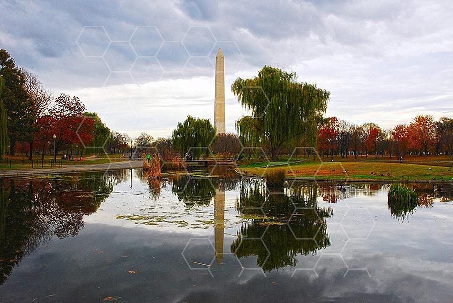 Foliage Washington Dc 010