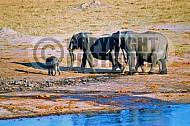 Elephant 0040